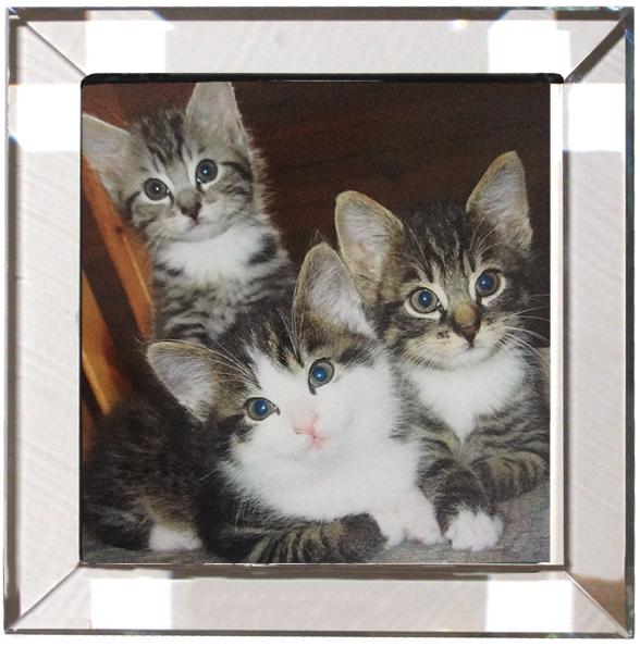 Kristall quadrat Katzen