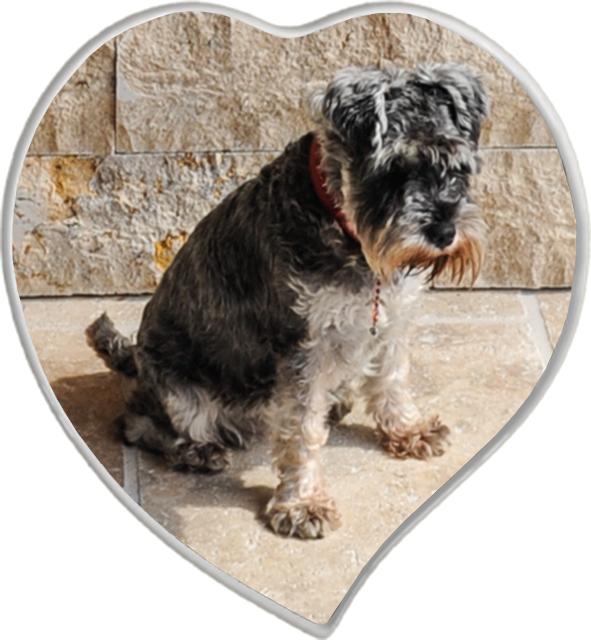 Porzellan Herz Hund
