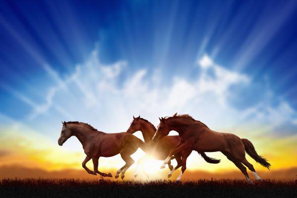 Pferdebestattung